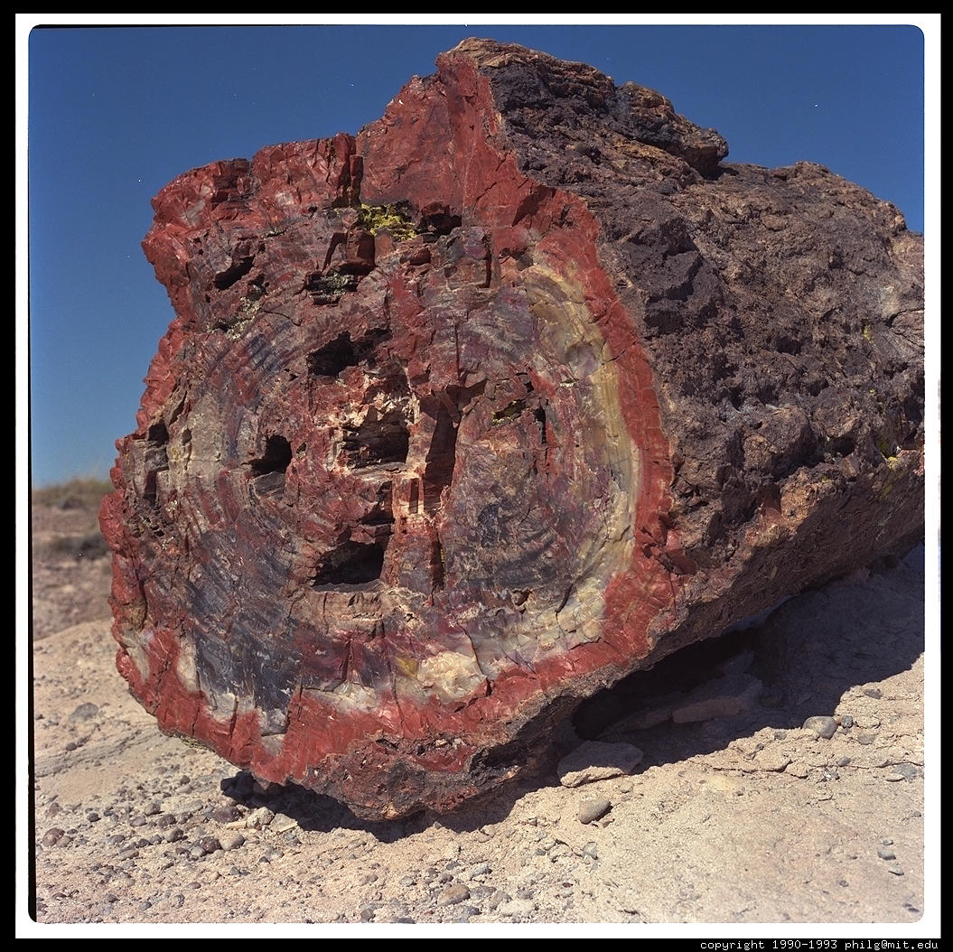 Rock units relative dating fossils 1