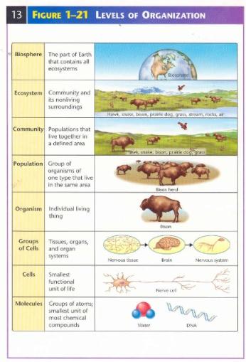 bio organization