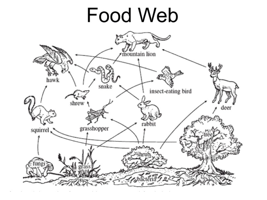 food web coloring pages food chain colouring pages sketch coloring page