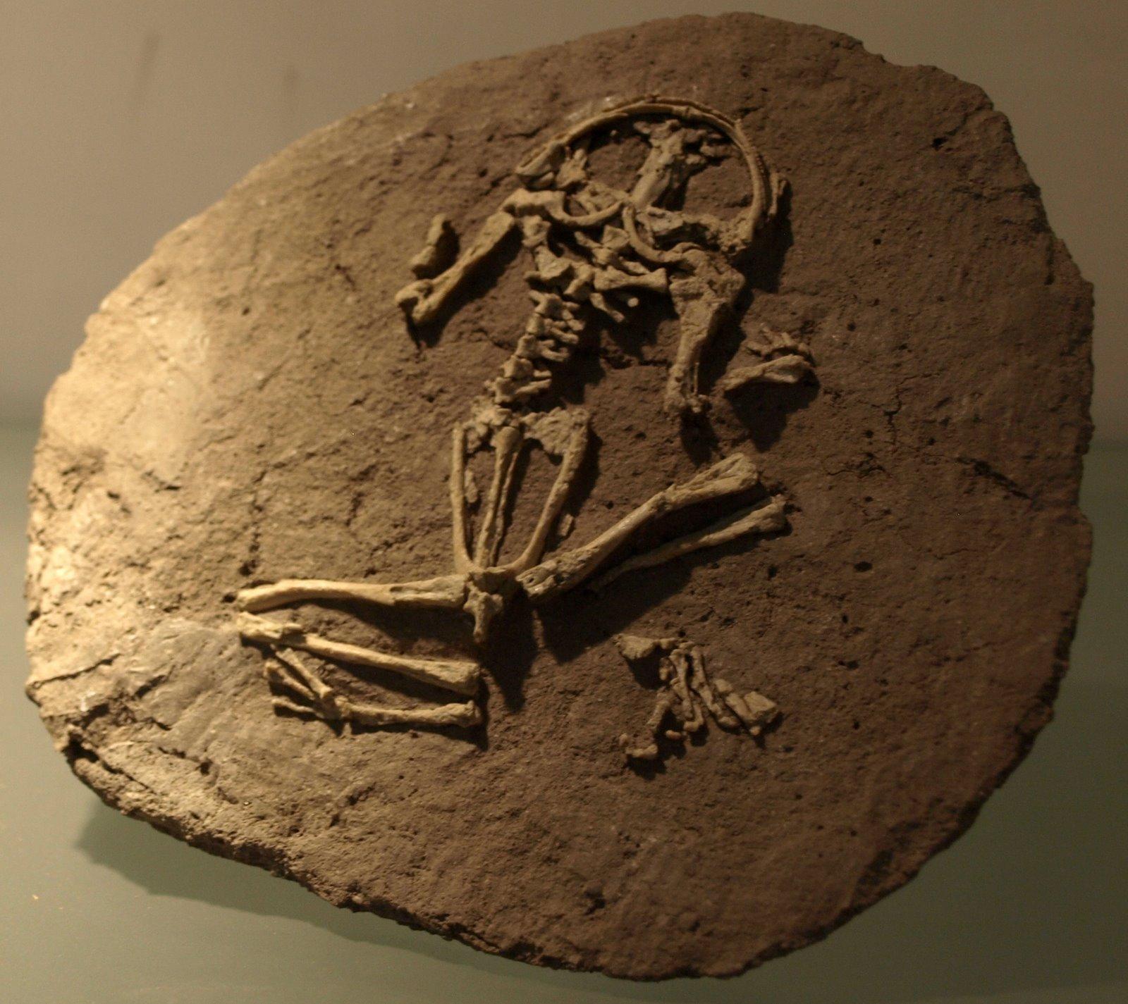 Types of Fossils « Mr Calaski
