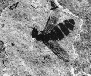insect carbon film