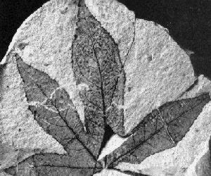 Types Of Fossils 171 Mr Calaski